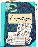 Catalogue coquillages